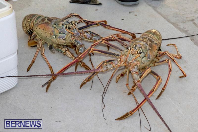 Lobster-Tournament-Makin-Waves-Goslings-Bermuda-September-2-2018-3818
