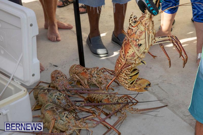 Lobster-Tournament-Makin-Waves-Goslings-Bermuda-September-2-2018-3819