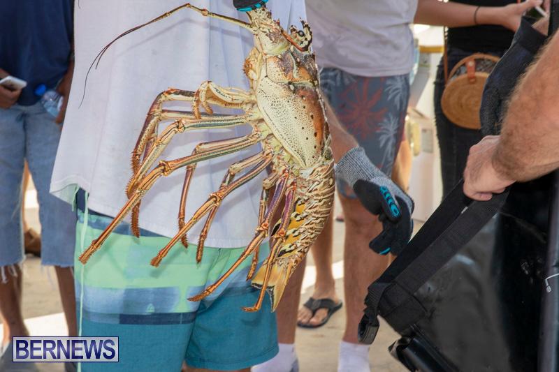 Lobster-Tournament-Makin-Waves-Goslings-Bermuda-September-2-2018-3835