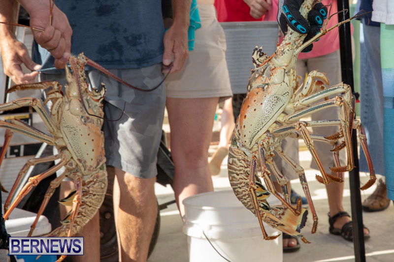 Lobster-Tournament-Makin-Waves-Goslings-Bermuda-September-2-2018-3839