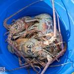 Lobster Tournament Makin Waves Goslings Bermuda, September 2 2018-3848