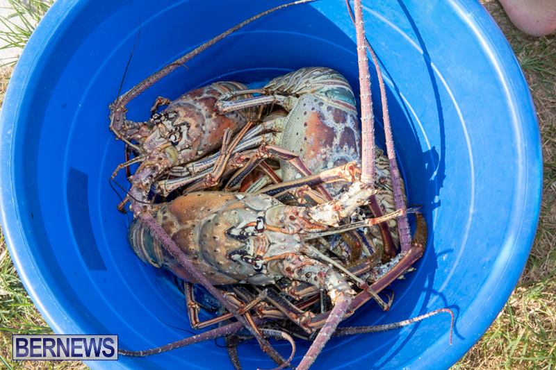 Lobster-Tournament-Makin-Waves-Goslings-Bermuda-September-2-2018-3848