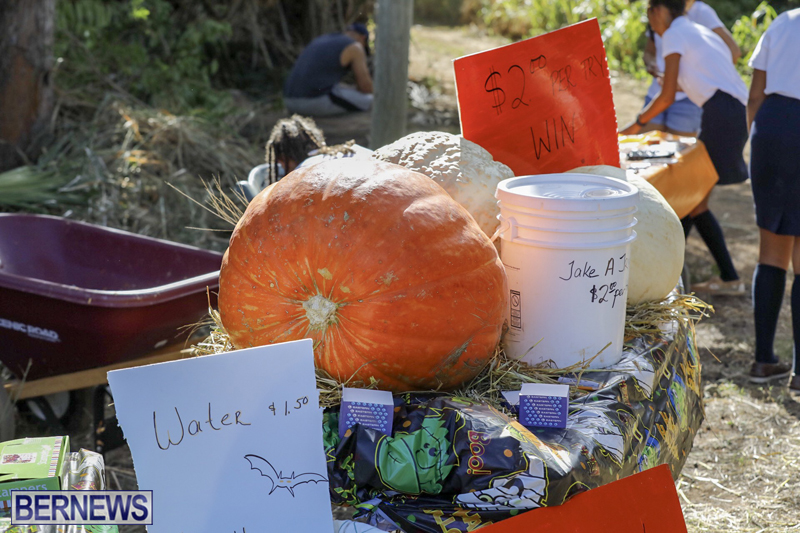 JJs-Pick-Your-Own-Pumpkin-Bermuda-Oct-12-2018-15