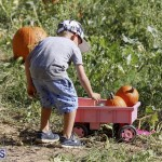 J&J's Pick Your Own Pumpkin Bermuda Oct 12 2018 (23)