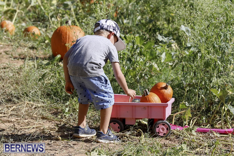 JJs-Pick-Your-Own-Pumpkin-Bermuda-Oct-12-2018-23