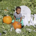 J&J's Pick Your Own Pumpkin Bermuda Oct 12 2018 (40)