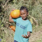 J&J's Pick Your Own Pumpkin Bermuda Oct 12 2018 (41)