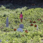 J&J's Pick Your Own Pumpkin Bermuda Oct 12 2018 (5)