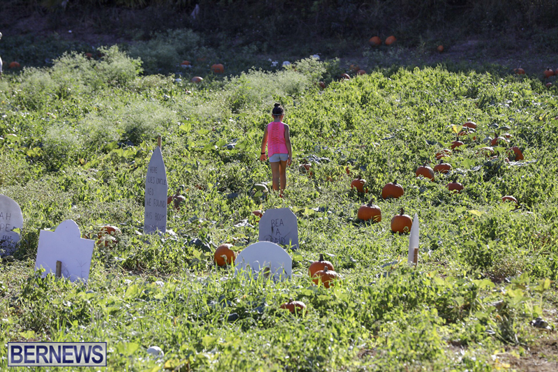 JJs-Pick-Your-Own-Pumpkin-Bermuda-Oct-12-2018-5