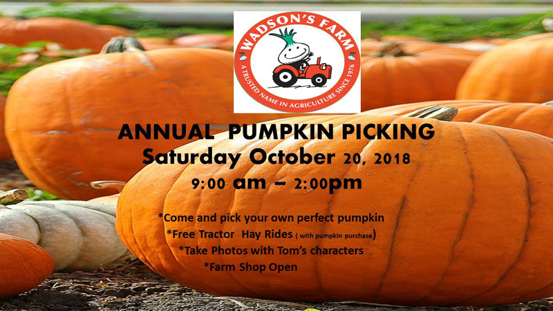 Wadson's Farm Pumpkin Picking Bermuda Oct 2018