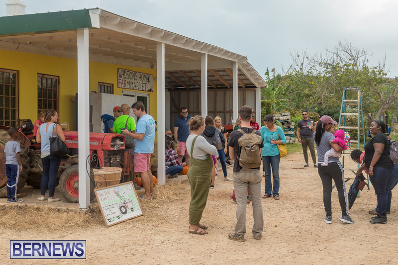 Wadsons-Farms-Pumpkin-Picking-Event-Bermuda-October-20-2018-12