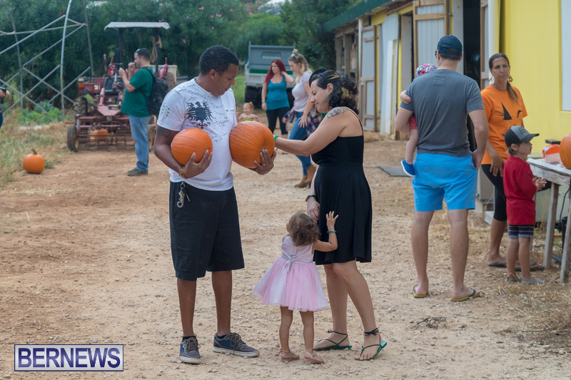 Wadsons-Farms-Pumpkin-Picking-Event-Bermuda-October-20-2018-19