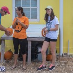 Wadsons Farms Pumpkin Picking Event Bermuda, October 20 2018 (2)