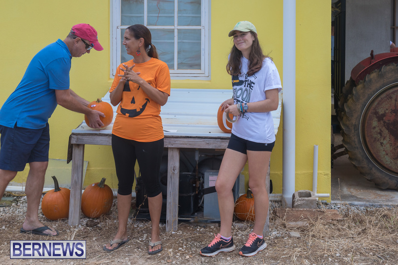 Wadsons-Farms-Pumpkin-Picking-Event-Bermuda-October-20-2018-2