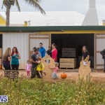 Wadsons Farms Pumpkin Picking Event Bermuda, October 20 2018 (21)