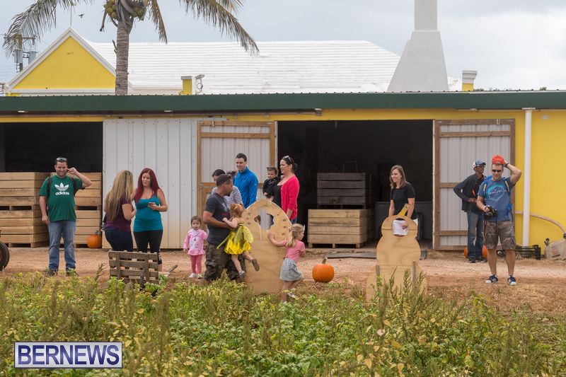 Wadsons-Farms-Pumpkin-Picking-Event-Bermuda-October-20-2018-21