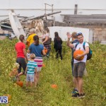 Wadsons Farms Pumpkin Picking Event Bermuda, October 20 2018 (22)