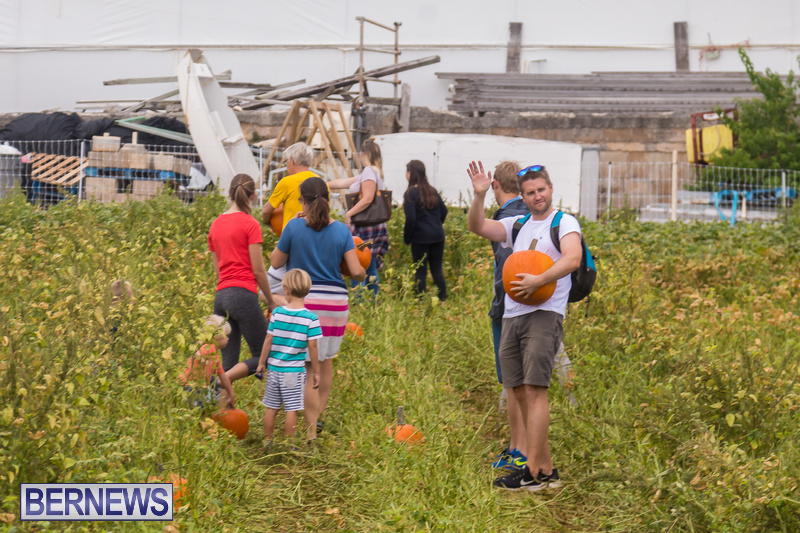 Wadsons-Farms-Pumpkin-Picking-Event-Bermuda-October-20-2018-22
