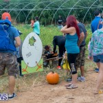 Wadsons Farms Pumpkin Picking Event Bermuda, October 20 2018 (24)