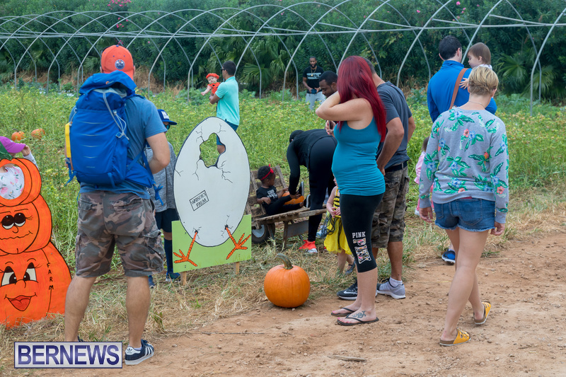 Wadsons-Farms-Pumpkin-Picking-Event-Bermuda-October-20-2018-24