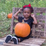 Wadsons Farms Pumpkin Picking Event Bermuda, October 20 2018 (25)