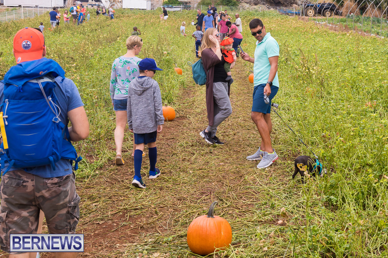 Wadsons-Farms-Pumpkin-Picking-Event-Bermuda-October-20-2018-26