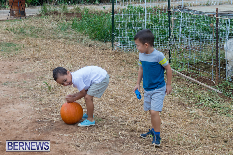 Wadsons-Farms-Pumpkin-Picking-Event-Bermuda-October-20-2018-27