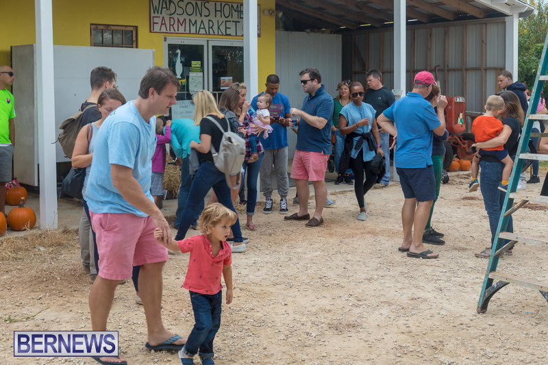 Wadsons-Farms-Pumpkin-Picking-Event-Bermuda-October-20-2018-28