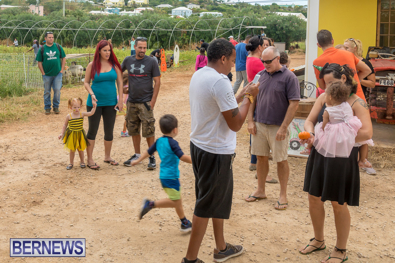 Wadsons-Farms-Pumpkin-Picking-Event-Bermuda-October-20-2018-29
