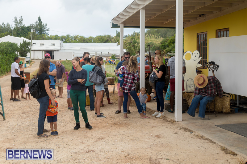 Wadsons-Farms-Pumpkin-Picking-Event-Bermuda-October-20-2018-32