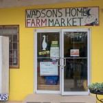 Wadsons Farms Pumpkin Picking Event Bermuda, October 20 2018 (33)