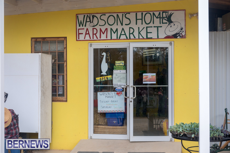 Wadsons-Farms-Pumpkin-Picking-Event-Bermuda-October-20-2018-33