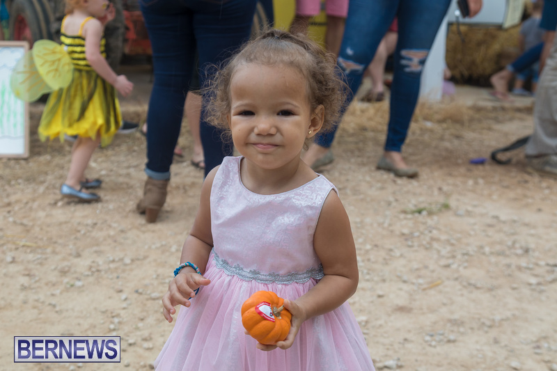 Wadsons-Farms-Pumpkin-Picking-Event-Bermuda-October-20-2018-34