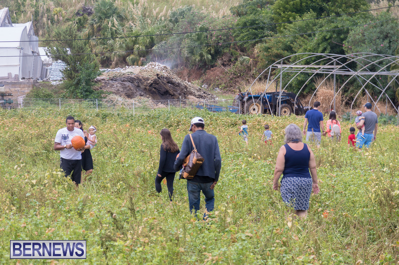 Wadsons-Farms-Pumpkin-Picking-Event-Bermuda-October-20-2018-4
