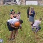 Wadsons Farms Pumpkin Picking Event Bermuda, October 20 2018 (5)
