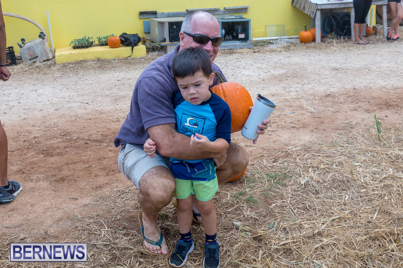 Wadsons-Farms-Pumpkin-Picking-Event-Bermuda-October-20-2018-6