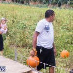 Wadsons Farms Pumpkin Picking Event Bermuda, October 20 2018 (7)