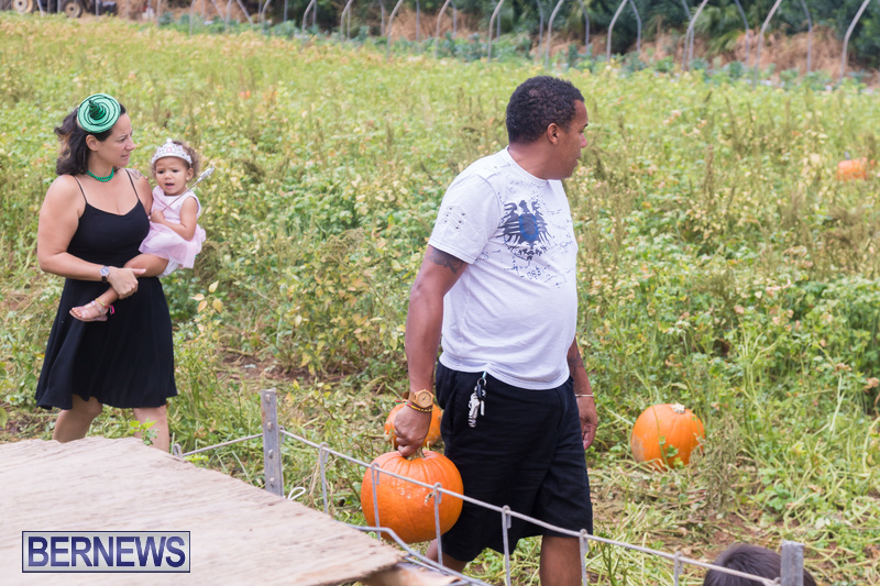 Wadsons-Farms-Pumpkin-Picking-Event-Bermuda-October-20-2018-7