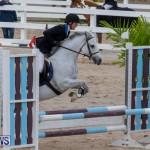 Bermuda Equestrian Federation Jumper Show, November 24 2018-0080