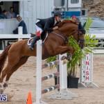 Bermuda Equestrian Federation Jumper Show, November 24 2018-9905