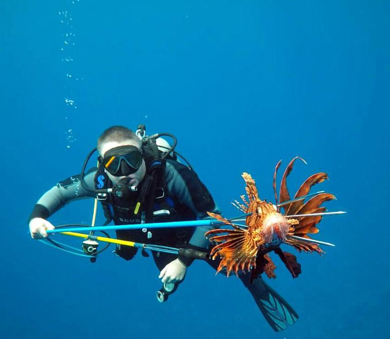 Bermuda Fall Lionfish Derby Nov 2018
