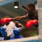 Bermuda Redemption Boxing Nov 2018 JM (135)