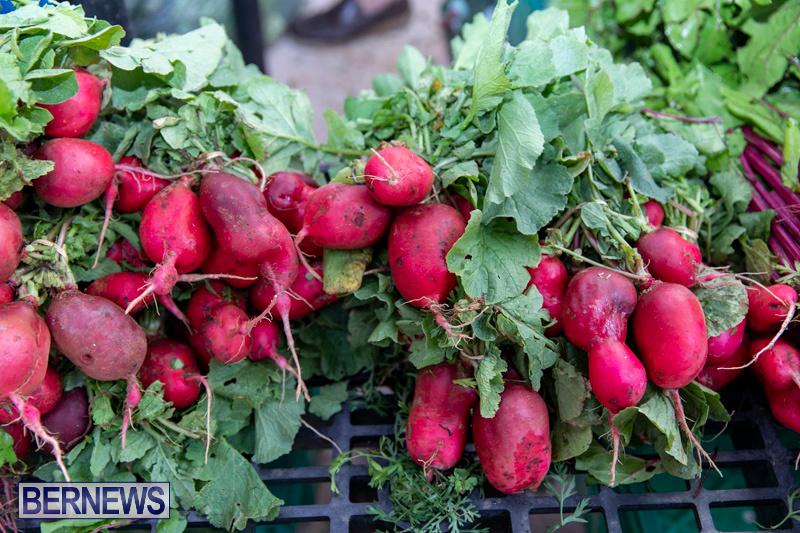 Farmers-Market-Botanical-Gardens-Bermuda-College-November-17-2018-9010