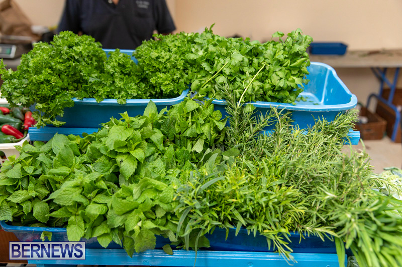 Farmers-Market-Botanical-Gardens-Bermuda-College-November-17-2018-9082