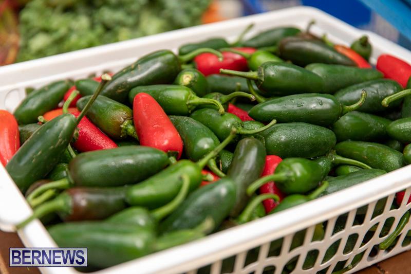 Farmers-Market-Botanical-Gardens-Bermuda-College-November-17-2018-9092
