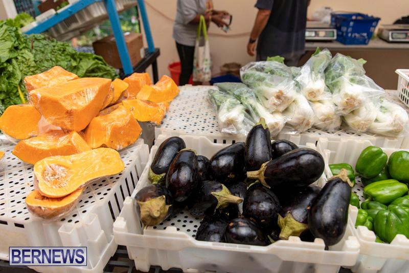 Farmers-Market-Botanical-Gardens-Bermuda-College-November-17-2018-9093