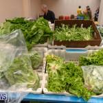 Farmer's Market Botanical Gardens Bermuda College, November 17 2018-9095