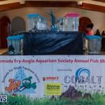 Fry-Angle Aquarium Fish Show Bermuda, November 17 2018-9201