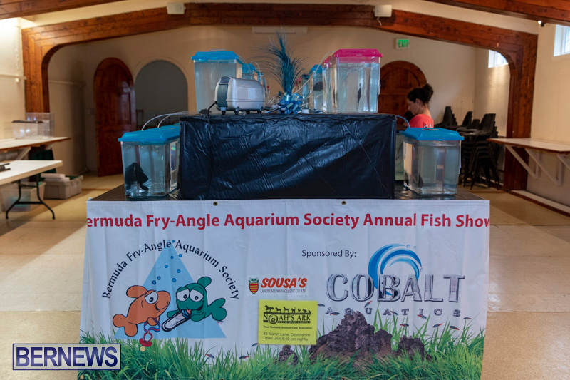 Fry-Angle-Aquarium-Fish-Show-Bermuda-November-17-2018-9201