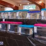 Fry-Angle Aquarium Fish Show Bermuda, November 17 2018-9202